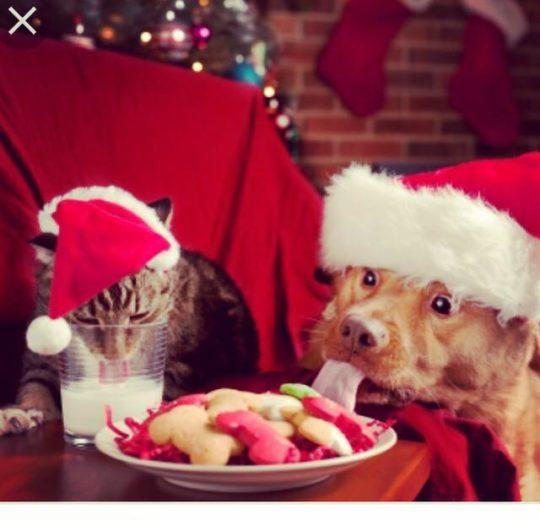 Natale è per tutti!