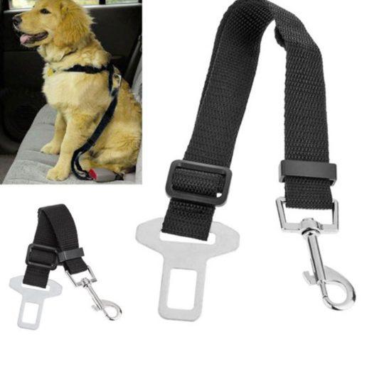 Cinture di sicurezza cani