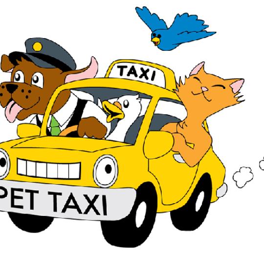 Pet taxi e pensione Sofy Mama