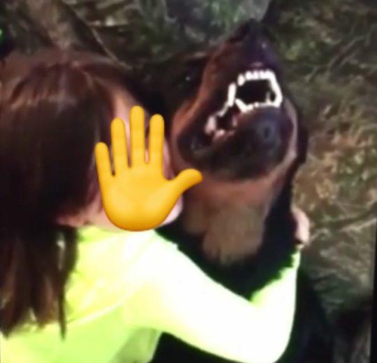 Il cane rianimatore