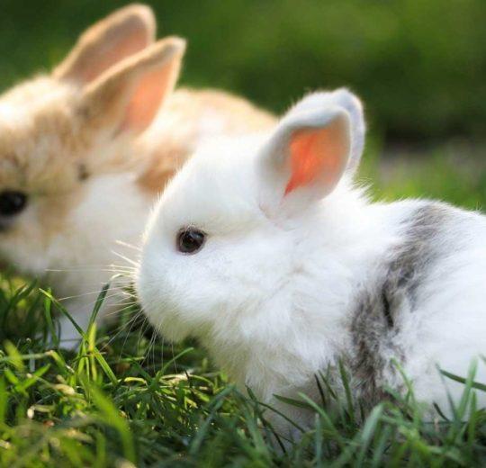 L'angolo del coniglio