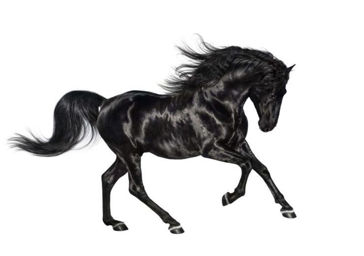 Come fanno i cavalli a dormire in piedi?