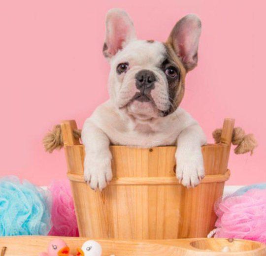 Ogni quanto fare il bagno al cane?